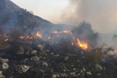 Incendio-Localita-FIeste-26.08.2017-4
