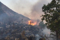 Incendio-Localita-FIeste-26.08.2017-5