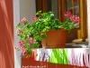 bagnoli-irpino-rosa-per-il-giro-d-italia00009