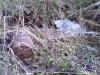 Bagnoli-Irpino-Monnezzaro-Giudecca-1