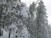 lago-laceno-nevicata-11-febbraio-2012i00015