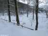 lago-laceno-nevicata-11-febbraio-2012i00020