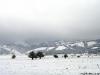 lago-laceno-neve-pasquetta-201200011
