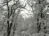 monte-terminio-neve-pasquetta-201200006