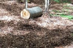 Laceno-taglio-abusivo-legna-giugno-2017-25