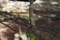 Laceno-taglio-abusivo-legna-giugno-2017-26