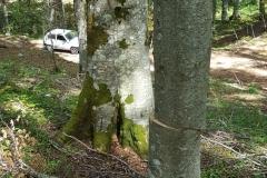 Laceno-taglio-abusivo-legna-giugno-2017-28