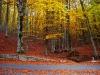 Laceno-autunno-2008-2009-13