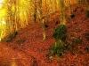 Laceno-autunno-2008-2009-2