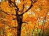Laceno-autunno-2008-2009-3