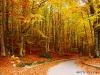 Laceno-autunno-2008-2009-7