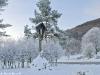 lago-laceno-record-di-freddo-13-dicembre-201200008