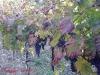 Colori d'ottobre a Bagnoli 27