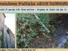 Bagnoli-Pulizia-San-Domenico-2014_Pagina_20