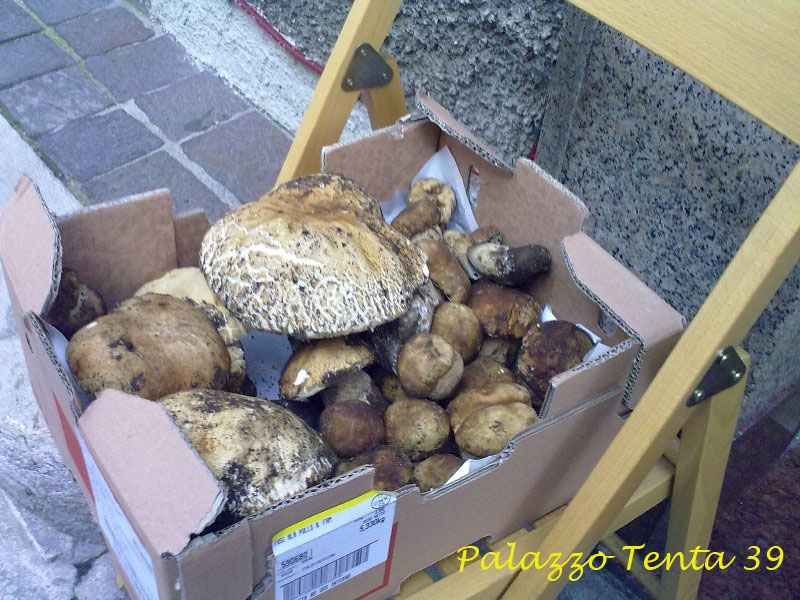 Sagra pecorino e scorzone 2010 039