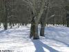 monte-cervialto-2012-lago-laceno-innevatoi00020
