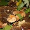 34esima Sagra della castagna e mostra-mercato del tartufo – Appuntamento dal 28 al 31 ottobre 2011