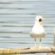 """""""Laceno bello naturale"""" ci racconta l'avifauna dell'Altopiano"""