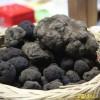 La 39° edizione della Mostra Mercato del tartufo nero di Bagnoli