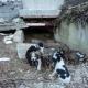 Laceno - Cani abbandonati, la denuncia degli animalisti