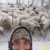 Pastori e pecore bloccati da gelo e neve: «Liberate le strade»