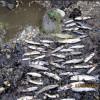 Fiume Calore - Il dado è tratto: la morte delle FARIO