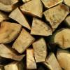 Hanno abbattuto 250 alberi per rubare legna: denunciati 2 boscaioli