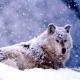 AMARCORD - HIRPINIA: terra di lupi!