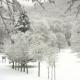 Ponte del 25 Aprile, potrebbe tornare la neve sul Laceno
