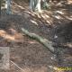 Laceno, ancora tagli abusivi di legna e un'altra pecora morta abbandonata