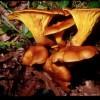 Funghi tossici, velenosi e mortali: ecco come comportarsi