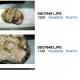 Scoperti a Laceno interessanti fossili