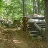 BAGNOLI IRPINO - I tagli boschivi fruttano al Comune
