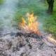 Abbruciamento residui vegetali, il Cfs chiarisce su nota Prefetto