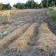 Bagnoli, agricoltura sinergica e permacultura