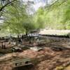 Le aree pic-nic del Laceno in gestione alla Pietas Irpina