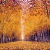 Boulevard d'autunno