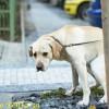 Bagnoli, multato per non aver raccolto la «cacca» del cane