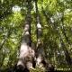 Pubblicazione internazionale di etnobotanica a Bagnoli Irpino