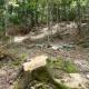 Danneggiamento boschivo e furto di legna: tre nei guai