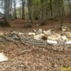 Laceno: danneggiamento boschivo e furto di legna. Due denunce