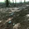 Riflessioni a margine della 1° giornata ecologica sull'altopiano Laceno