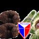 Bagnoli: La mostra mercato del tartufo parte il 26 ottobre, l'anteprima il 20-21