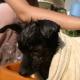 Pet Therapy: una dolce terapia, basata sull'interazione uomo animale