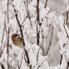 Proverbi meteorologici di febbraio