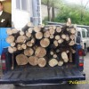 """Raccolta di legna """"secca"""" a Laceno, la rabbia di un residente"""