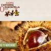 Montella, 30esima Sagra della Castagna IGP: 100 stand e prodotti irpini