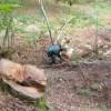 Tagliava faggi in una zona protetta dei Monti Picentini: nei guai boscaiolo