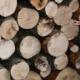 Bagnoli e Calabritto, danneggiamento boschivo e furto di legna: 3 denunce