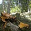 Tagliano alberi senza autorizzazione, denunciate due persone